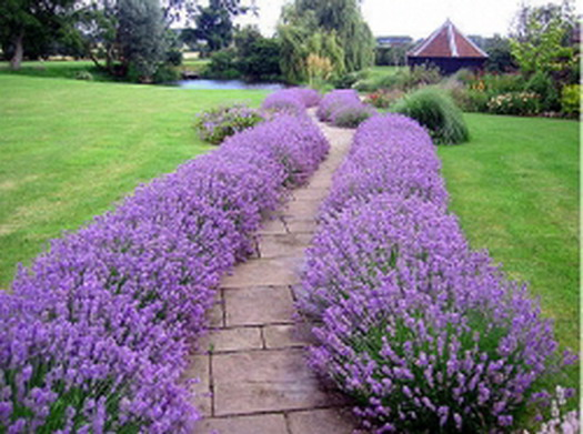 Design walkways and garden paths garden design for living - Garden pathway design ideas with some natural stones trails ...